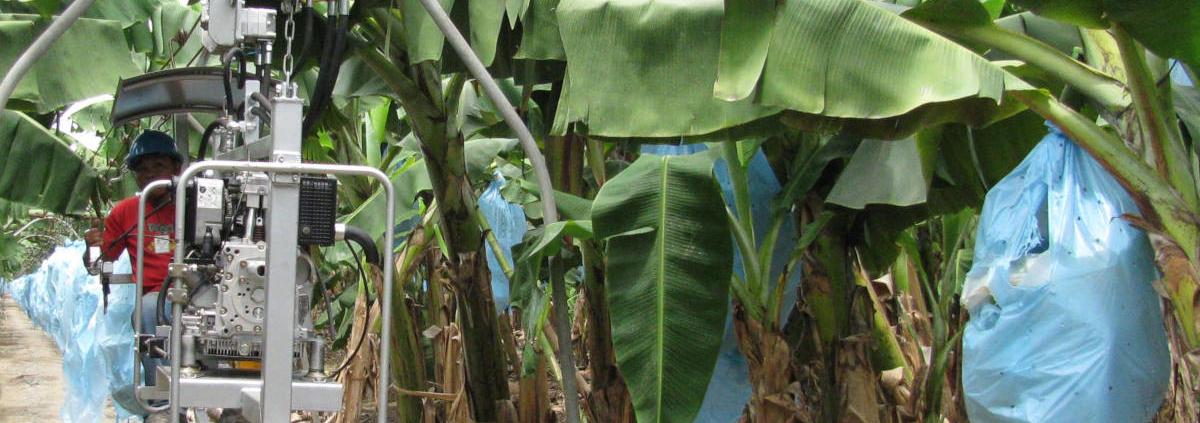 Banana Trac-Field